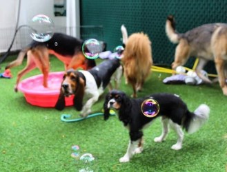 Enjoy Doggie Day Camp!
