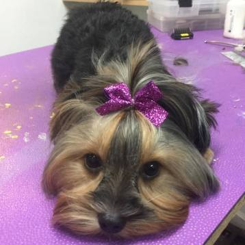 Professional Grooming Topped with A Bow